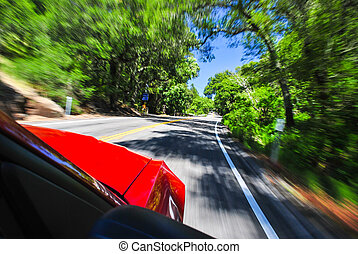 Zooming through the woods - Photograph from the passenger...