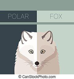 zorro polar, plano, postal