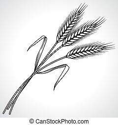 zralý, čerň, pšenice, satý, osamocený, vektor, ilustrace
