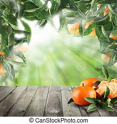 zralý, mandarín, dary, dále, léto, grafické pozadí, zdravý food