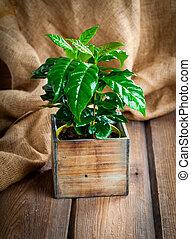 zrnková káva, bylina, treeon, pytlovina, dřevěný, grafické...