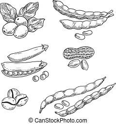 zrnková káva, harpuna, hrách, peanus, a, fazole