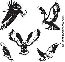 zsákmány, öt, stilizált, madarak