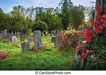 zsidó, öreg, temető