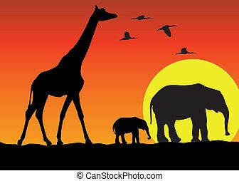 zsiráf, és, elefántok, alatt, afrika