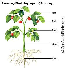 zubehörteil, von, a, pflanze