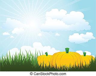 zucche, erba