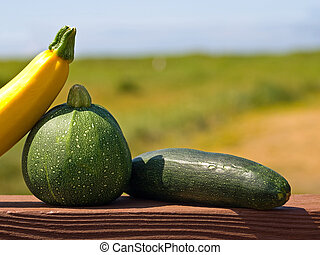 Zucchini Outside on a Wooden Deck Rail in Full Sunshine