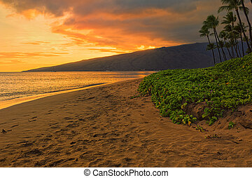 zucker, sandstrand, kihei, maui, hawaii, usa