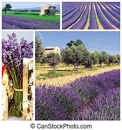 zuiden, lavendel, franse