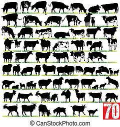 zuivelbedrijf vee, silhouettes, set