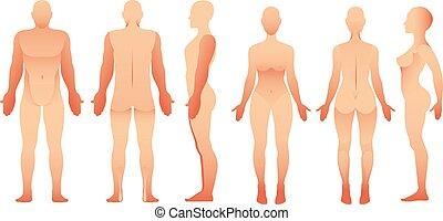 zurück, menschliche , mann, vektor, ans, front, ansicht., women., koerper, silhouetten, seite