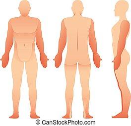 zurück, menschliche , mann, vektor, front, ansicht., koerper, silhouetten, seite