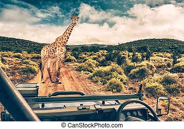 zvěř a rostlinstvo, afričan, safari