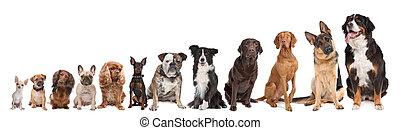 zwölf, reihe, hunden
