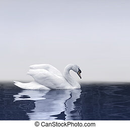 zwaan, reflectie