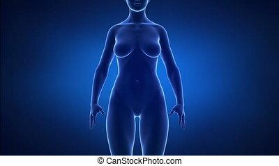 zwaarlijvigheid, en, gezonde , levensstijl, concept, voorafgaande bezichtiging, detail
