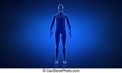 zwaarlijvigheid, en, helathy, levensstijl, concept, voorafgaande bezichtiging