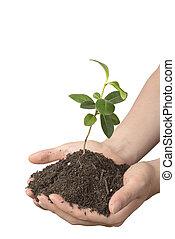 zwak, plant, met, terrein, op, handen