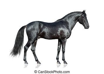 zwart paard, op wit