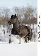 zwart paard, uitvoeren, winter, galop