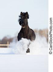 zwart paard, uitvoeren, winter