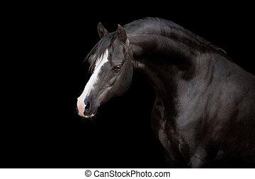 zwart paard, vrijstaand, op, black