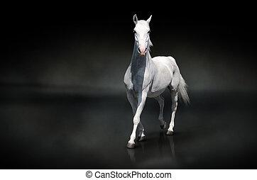zwart paard, vrijstaand, witte