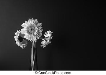 zwart wit, bloem, in bloem, op, zwarte achtergrond