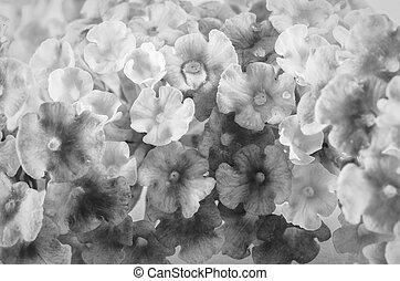 zwart wit, bloem
