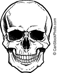 zwart wit, menselijke schedel, met, kaak