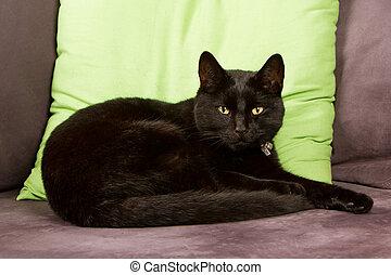 zwarte kat, vrijstaand