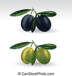 zwarte olijven, groene