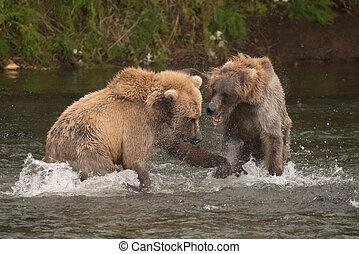 zwei bären, kämpfen, einander, in, fluß