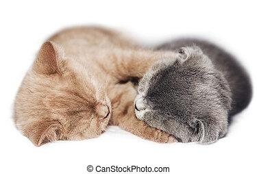 zwei, babykatzen, umarmen, schlaf