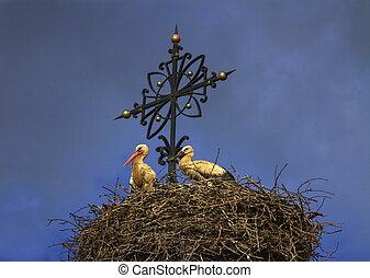 zwei, europäische , weißes, störche, ciconia, in, der, nest