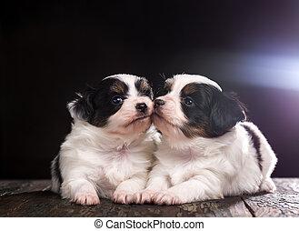 zwei, hundebabys, ar, küssende