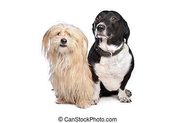 zwei, hunden