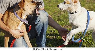 zwei, hunden, und, trainer, spielende , park