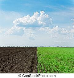 zwei, landwirtschaft, felder, unter, trüber himmel
