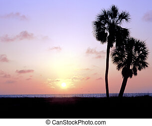 zwei, palmen