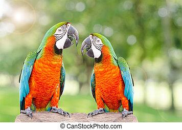 zwei, papagai, stehende , auf, trocken, baum