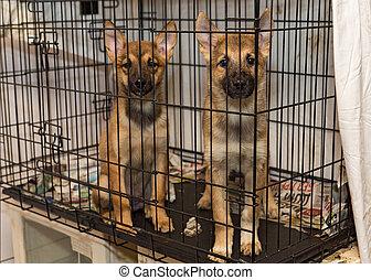 zwei, wenig, junger hund, hunden