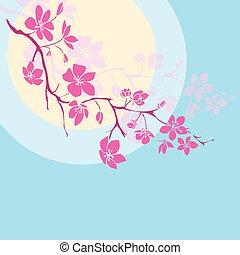 zweig, kirschblüten