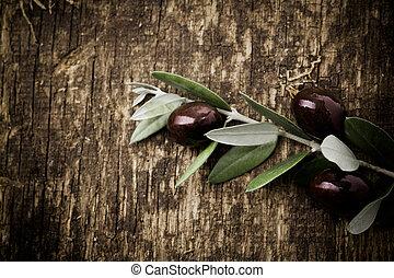 zweig, mit, frisch, schwarze oliven
