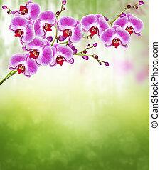 zweig, von, blühen, orchidee, blumen