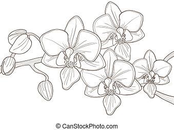 zweig, von, orchidee