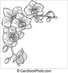 zweige, abbildung, vektor, monochrom, orchidee, schöne