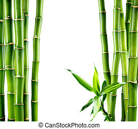 zweige, brett, bambus