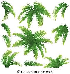 zweige, von, palmen